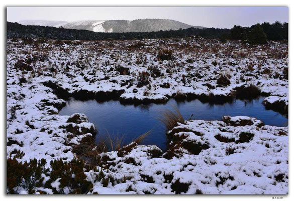 NZ0303.Tongariro N.P.Tümpel im Schnee