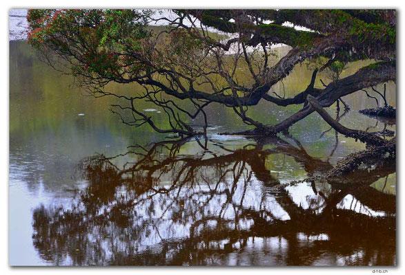 NZ0882.Stewart Island.Rakiura Track.Creek mound