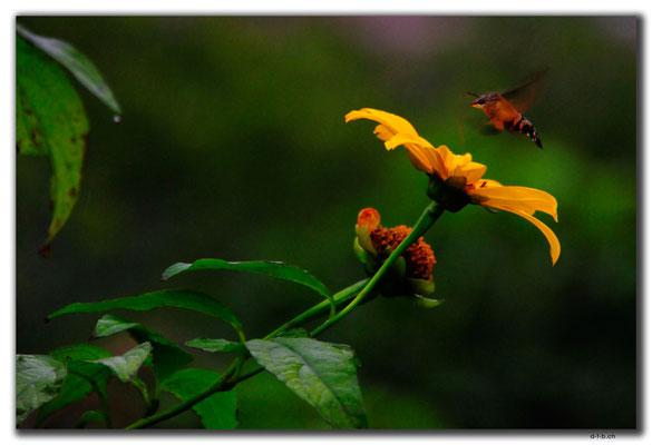 TW0041.Taipei.Blume und Insekt