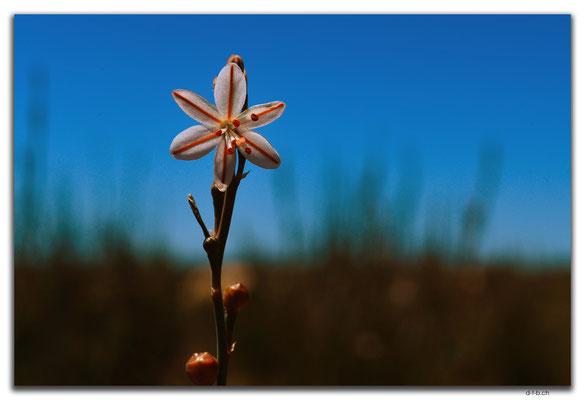 AU0906.90 Mile Road.Blume