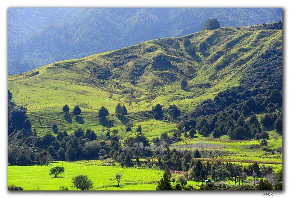 NZ0089.Wekaweka