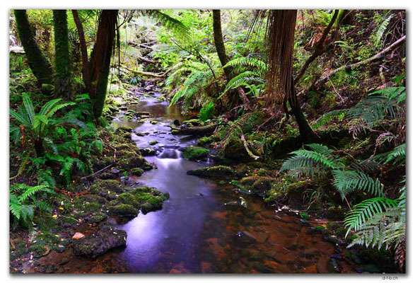 NZ0848.Stewart Island.Oban.Fern Gully