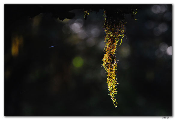AU1476.Bemm River Rainforest Walk