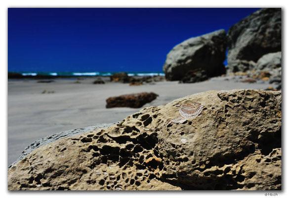 NZ0605.Farewell Spit. Fossil Point
