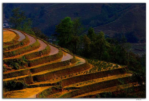 VN0057.Sapa.Muong Hoa Valley