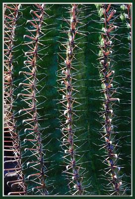 LAN028 Jardin de Cactus