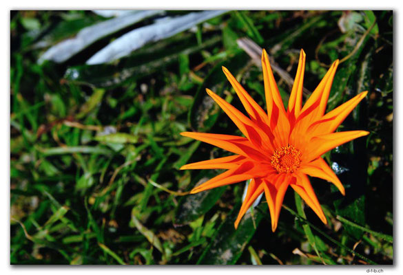 NZ0099.Ahipara.Blume