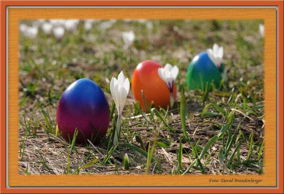 A0252.Krokus mit Eiern.Klosters.CH