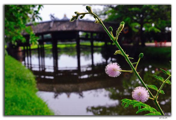 VN0208.Blume bei Thanh Toan Bridge