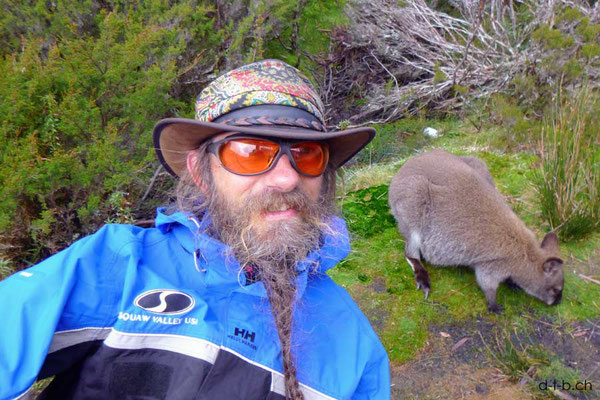 Australien.Tasmanien.Overland Track.Waterfall Hut.Wallaby