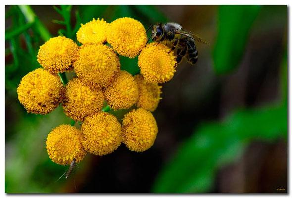 DE126.Jüchen.Biene und Mücke