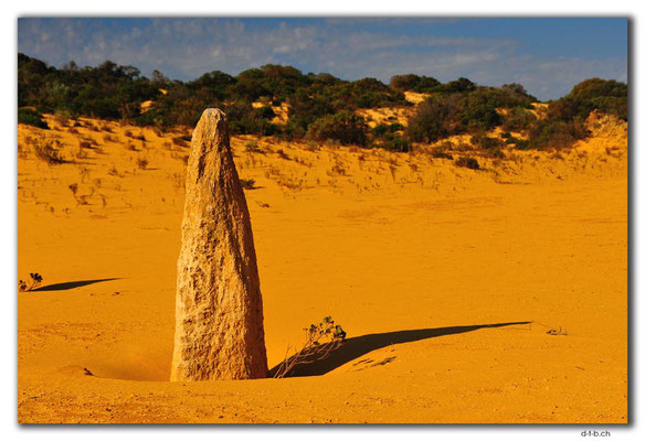 AU0595.Nambung N.P.Pinnacles
