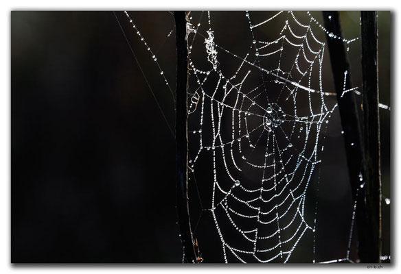 RO0036.Spinnennetz
