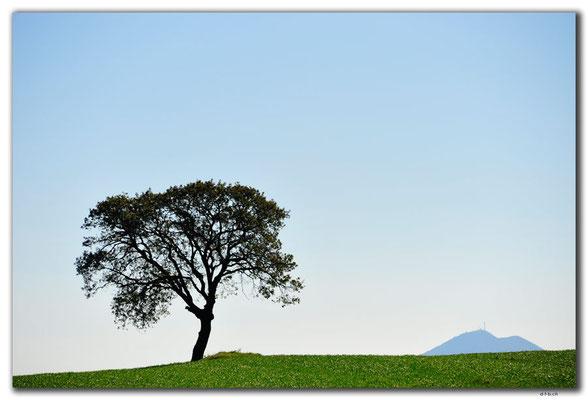 GR0075.Baum