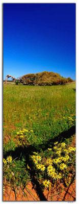 AU0511.Greenough.Leaning Tree