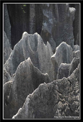 C0829Stone Forest