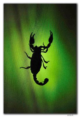AU0945.Nullarbor N.P. Scorpion