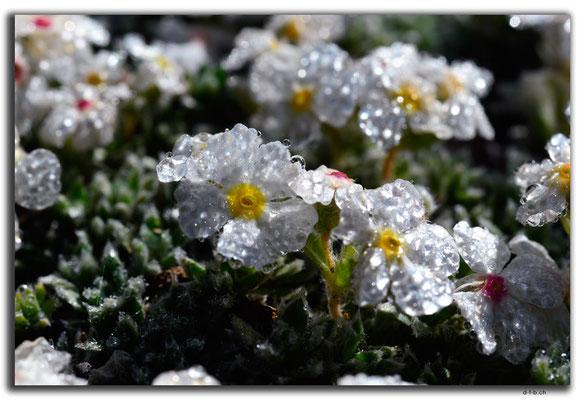 CN0014.Sayram See.Blume