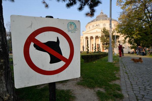 Rumänien.Bukarest03