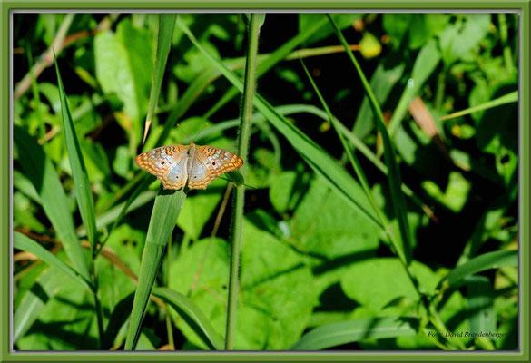 JM064.RPR Schmetterling