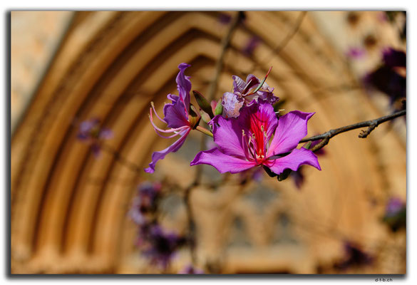 TR0566.Gazimagusa.St.Nicholas Cathedral