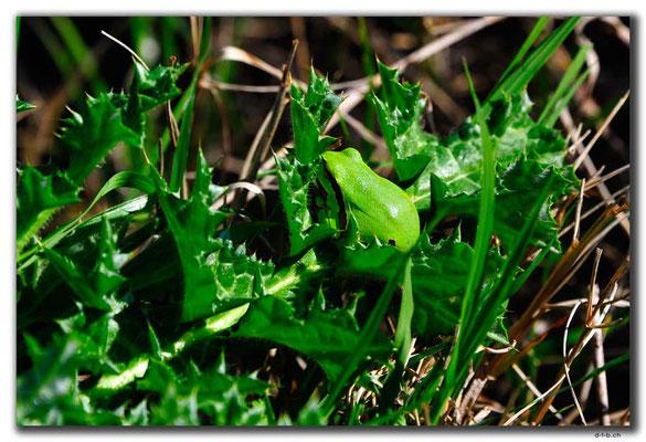 TR0275.Limyra.Frosch