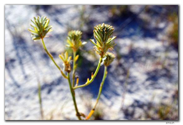 AU0555.Lake Indoon.Blume