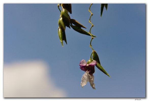 ID0085.Ubud.Blume