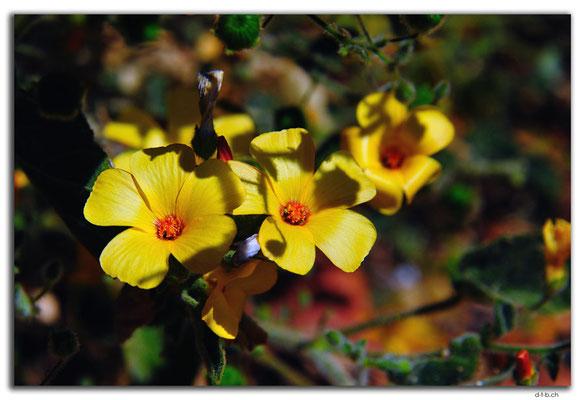 AU0350.Blume