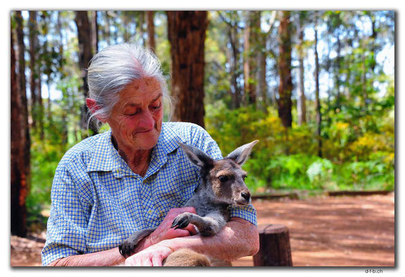 AU0754.Diamond Tree.Kangaroo-Lady of Manjimup