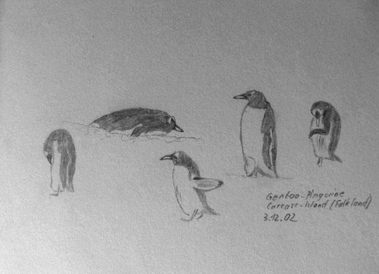 011.Skizze, Gentoo-Pinguine, Carcass-Island /Falkland Islands - Las Malvinas