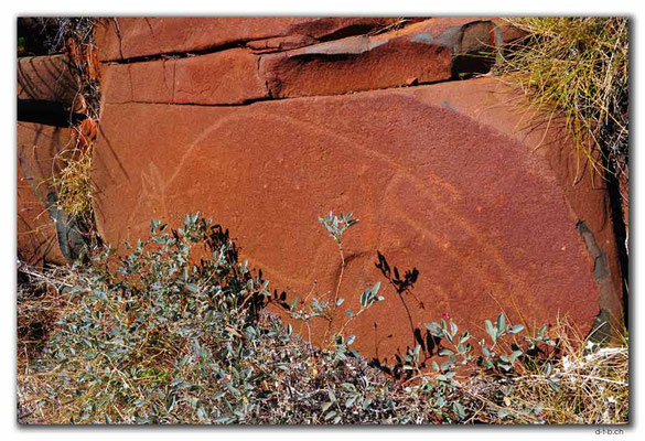 AU0322.Karratha.Rock Art.Kangaroo