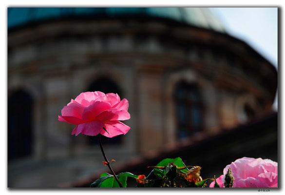 TR0955.Giresun.Rose bei Museum