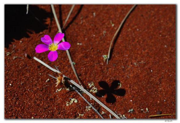 AU0347.Blume