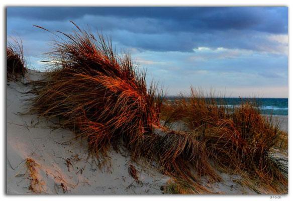 AU1102.Adelaide.Beach.Dünen
