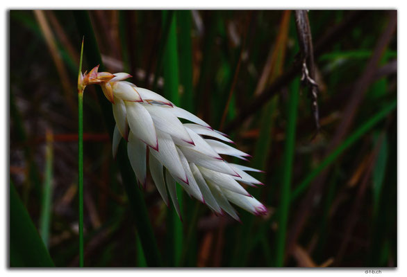 AU077.Deep River.Blume