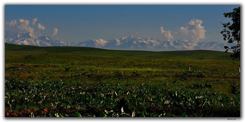 KZ0093.Kyrgyz Ala-Too