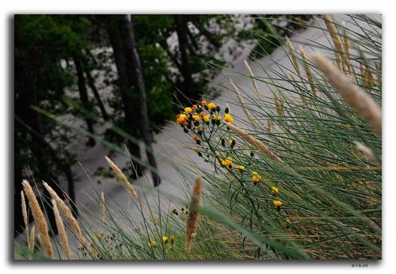 PL304.Leba.Blume