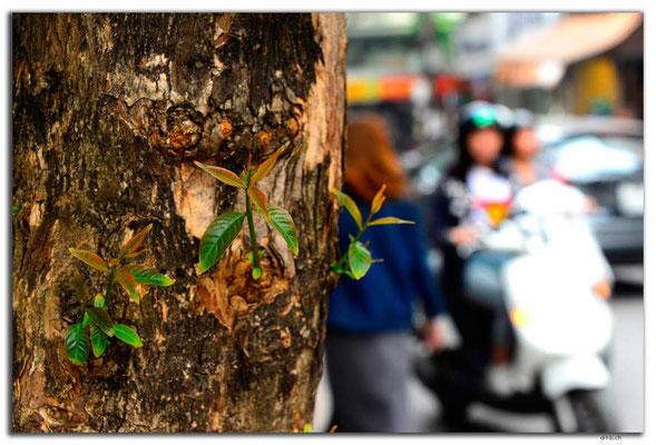 VN0085.Hanoi.Grün in der Stadt