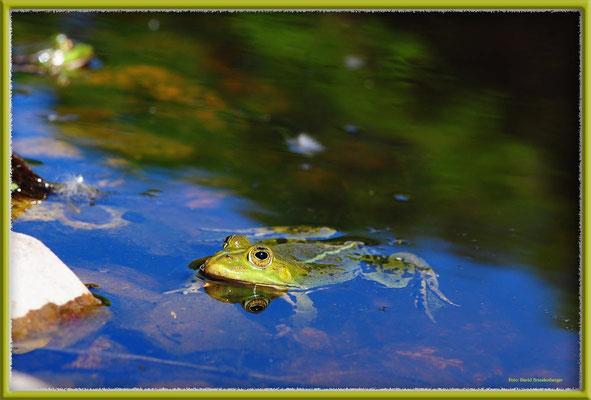 A0485.Frosch.Zingst.