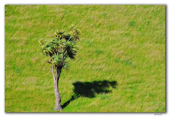 NZ0632.Puponga Farm Park.Tree