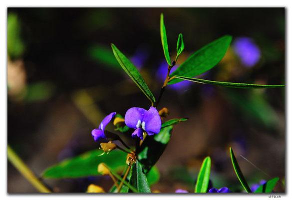 AU0762.Quinninup.Blume