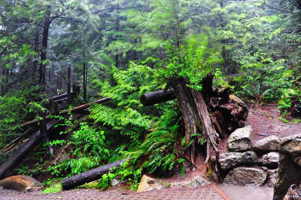 CA0133 Squamish Shannon Falls
