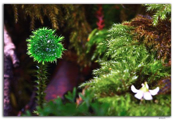 NZ0850.Stewart Island.Oban.Moss