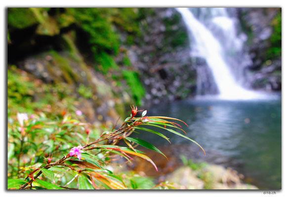 VN0184.Bach Ma N.P.Wasserfall