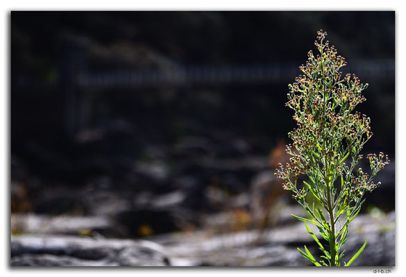 AU1271.Launceston.Cataract Gorge