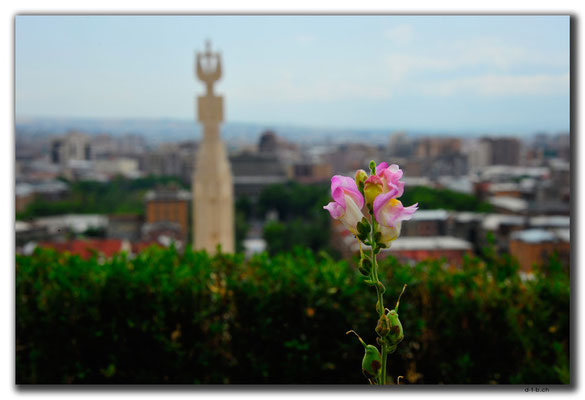 AM007.Yerevan.Orchidee