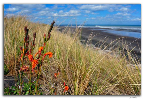 NZ0413.Waiinu Beach.Blume