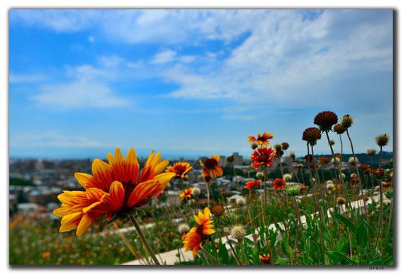 AM011.Yerevan.Blumen