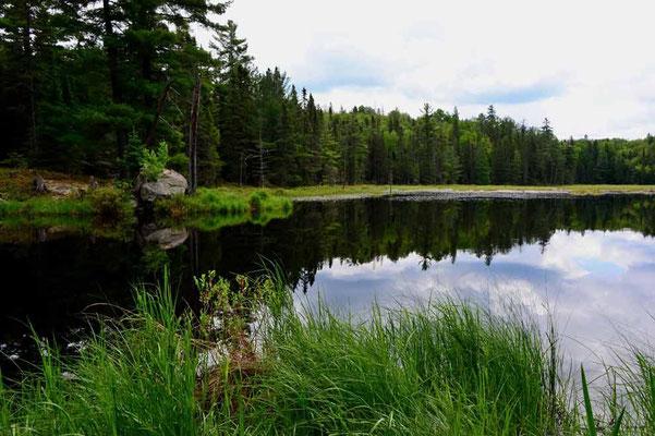 CA0481 Algonquin Park Amikeus Lake